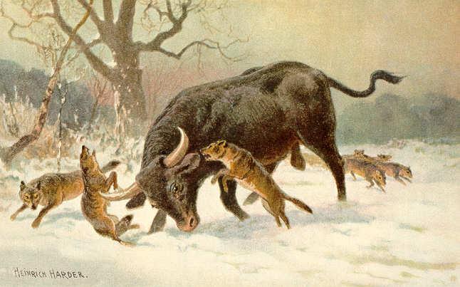 Maleri av en urokse som slåss mot et pakk med ulver. Av  Heinrich Harder (Wikimedia Commons)